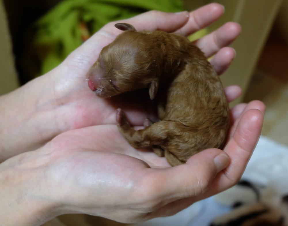 子犬 出産 ブログ