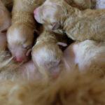 5月12日 すず出産 3姉妹